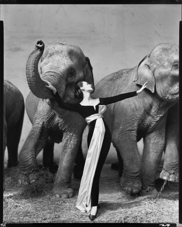 Myran elefanten och nygrens farmor