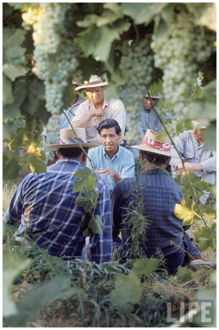 Grape Pickers Labor activist Cesar Chavez (C) talking in field w. grape pickers in support of the United Farm Workers Union Delano, CA, US 1968 Photo Arthur Schatz