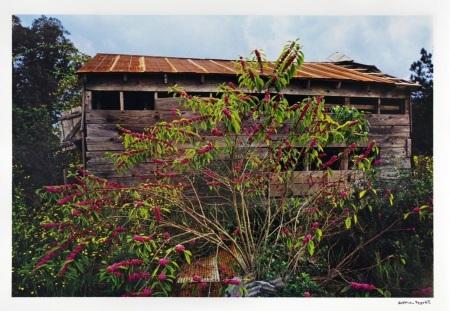 Untitled (Berries), 1976:2011