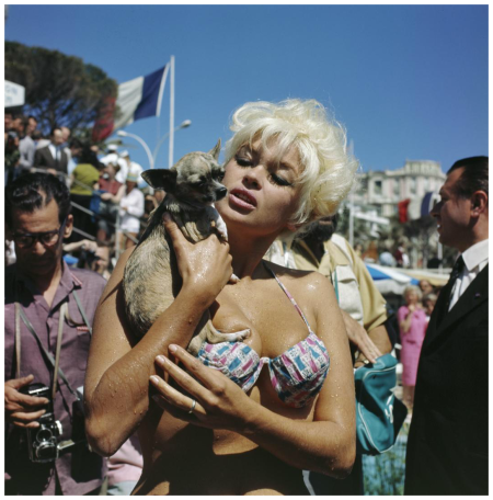 Cannes, actress, movie star Jayne Mansfield dog during the Film Festival Photo Kees Sherer