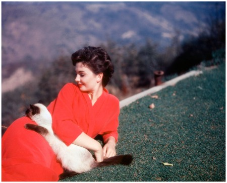 Jean Simmons The British actress hangs out on set with a Siamese in 1954 Baron Corbis