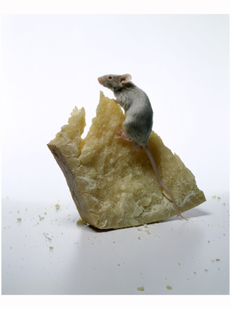 Photo Irving Penn - The Big Cheese Vogue Mar 1997