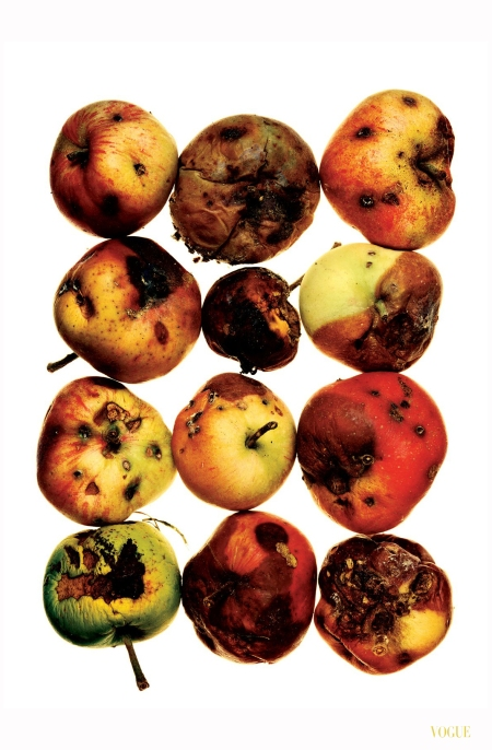 Red Apples, July 15, 1985  - Still Life Photo Irving Penn