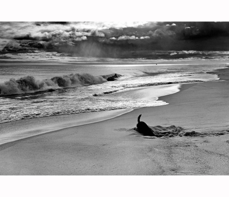 Elliott Erwitt - Sammy at the beach. East Hampton, NY, USA, 1998
