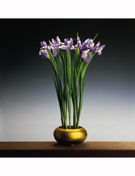 Irises, 1988