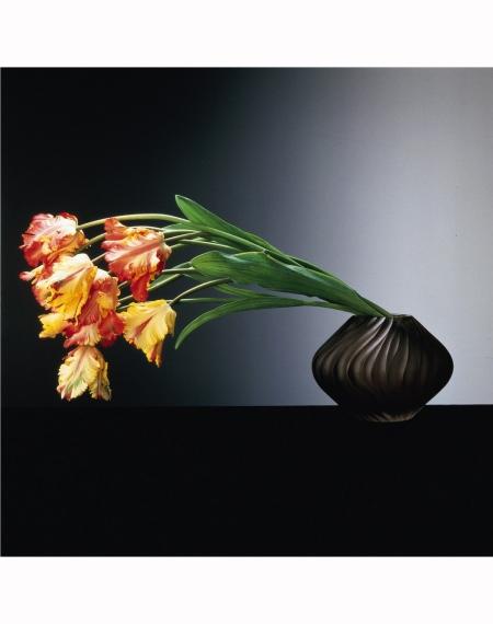 Parrot Tulips, 1988