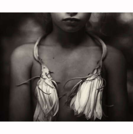 Sally Mann, Night-blooming Cereus, 1988 blooming-cereus