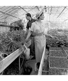anne-gunning-parker-wearing-a-one-piece-dress-with-striped-top-and-solid-skirt-with-hat-and-handbag-standing-with-an-unidentified-man-in-a-greenhouse-horst-p-horst-vogue-may-1954