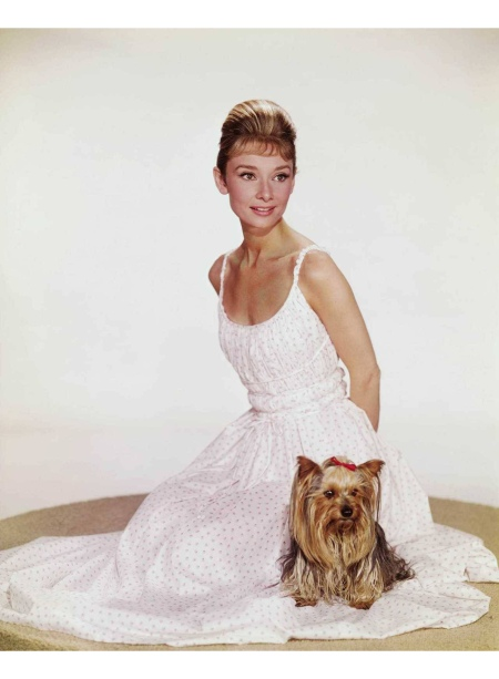 Audrey Hepburn photographed with Mr. Famous (her Yorkshire Terrier) © Bud Fraker