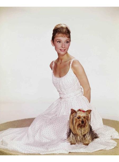 Audrey Hepburn photographed with Mr. Famous (her Yorkshire Terrier) © Bud Fraker